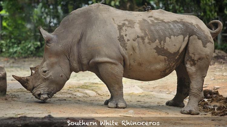 African Safari screenshot-4