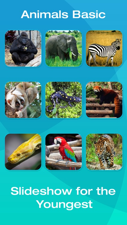 Safari and Jungle Animal Picture Flashcards for Babies, Toddlers or Preschool (Free)