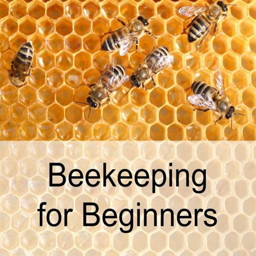 Beekeeping for Beginners:Tips and Tutorial