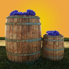 Activities of Vineyard Escape