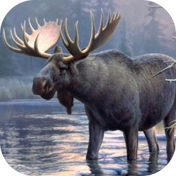 Moose Hunting Calls!