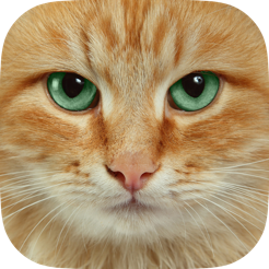 Cat Wallpapers Themes Backgrounds Download Cute Cats Hd Images Free On The App Store