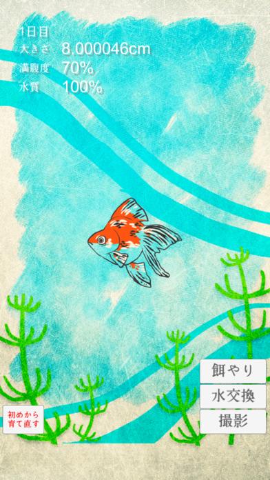 金魚育成アプリ
