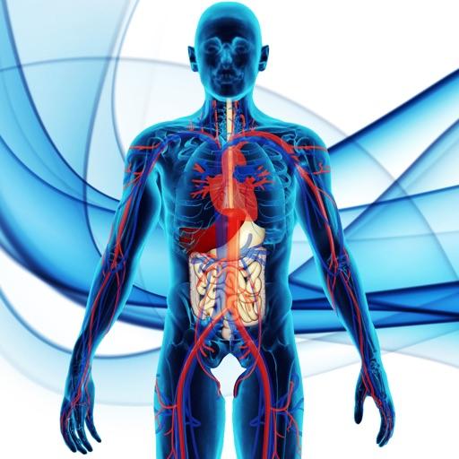 Fisiologia & Anatomia Atlas 3D