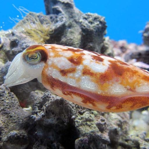 Beautiful Sea Animals and Views - Wallpapers & Slideshow HD