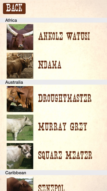 Cattle Breeds: Various Types of Cattle screenshot-2