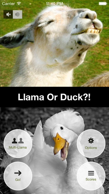 Llama Or Duck?! screenshot-1