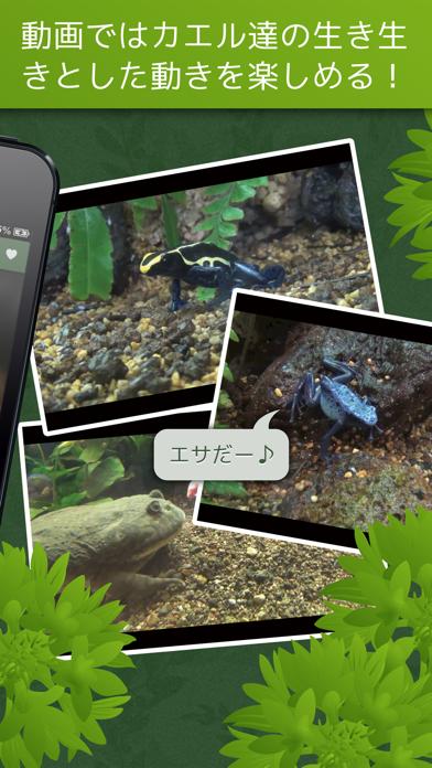 あわしま世界のカエル図鑑FREEのおすすめ画像4