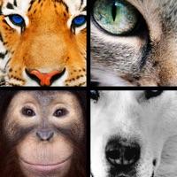 Codes for Quiz Pic: Animals Hack