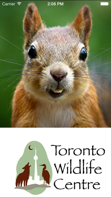 Wildlife Help - Toronto Wildlife Centre Rescue Injured, Sick & Orphaned Wild Animals