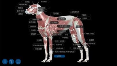 イヌの解剖学 - Dog Anatomy 3d - 窓用