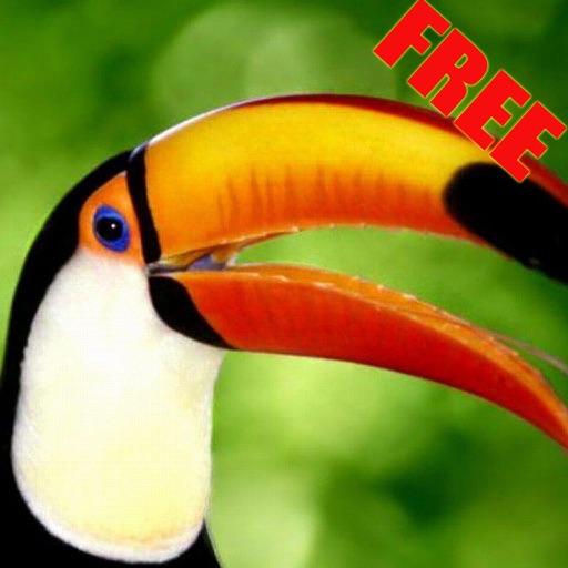 鸟叫大全免费版-有图有声音,有声有色