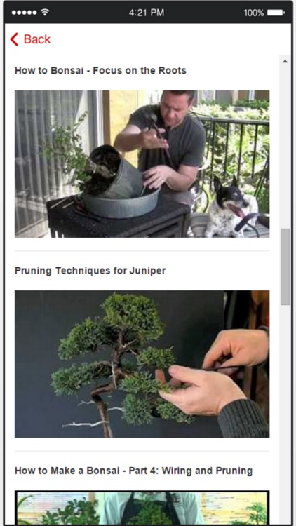 Bonsai Trees - How to Cultivate and Care for Bonsai Trees