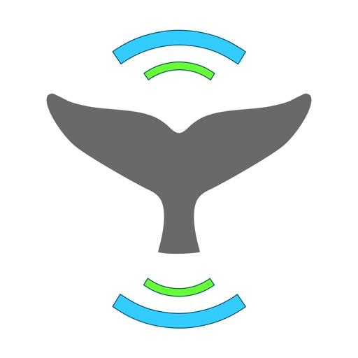 Whale Alert - Reducing Ship Strikes - Worldwide