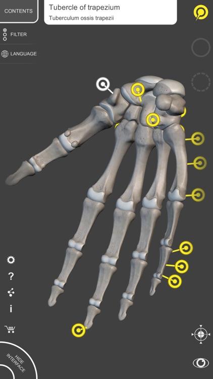 Skeleton - 3D Atlas of Anatomy screenshot-3