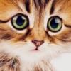 可爱的小猫猫壁纸和背景