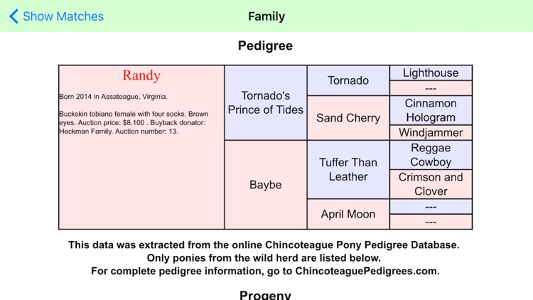 Chincoteague Pony Names screenshot-4