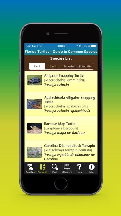 Florida Turtles – Guide to Common Species