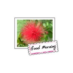 Wild Flowers stickers by wenpei