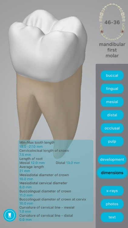 Dental Corpus Anatomy screenshot-3