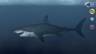 Talking Great White : My Pet Shark-3