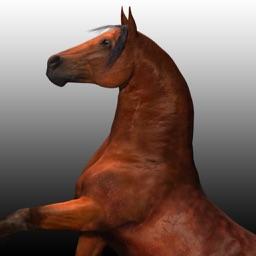 Horse  Race - Tiny Pony Horse Riding