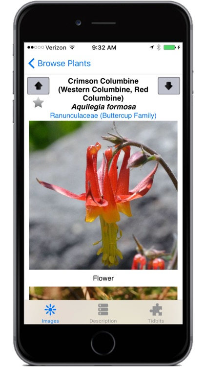 Yosemite Wildflowers screenshot-3