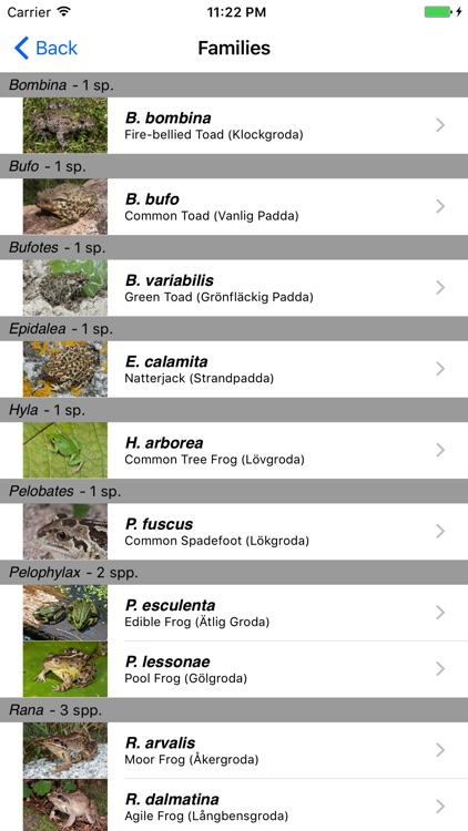 Reptiles and Amphibians of Sweden