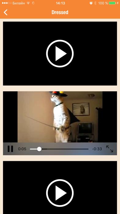 Catwalk - funny walking and talking cats & kittens screenshot three