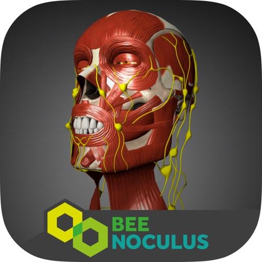 Baixar Anatomia da Cabeça - Medicina em Realidade Virtual para iOS