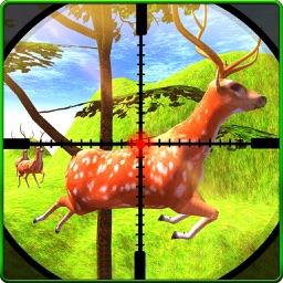 Animal Hunting Jungle Safari