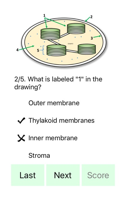 Cell Biology 101