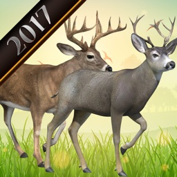 Extreme Deers Simulations 2017