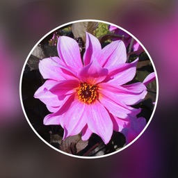 Photo Blur Editor - Touch Blur Effects & Mosaic
