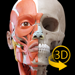 筋肉   骨格 - 解剖学3D アトラス