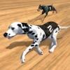 冲刺 100 米赛狗  在铁轨上跑狗