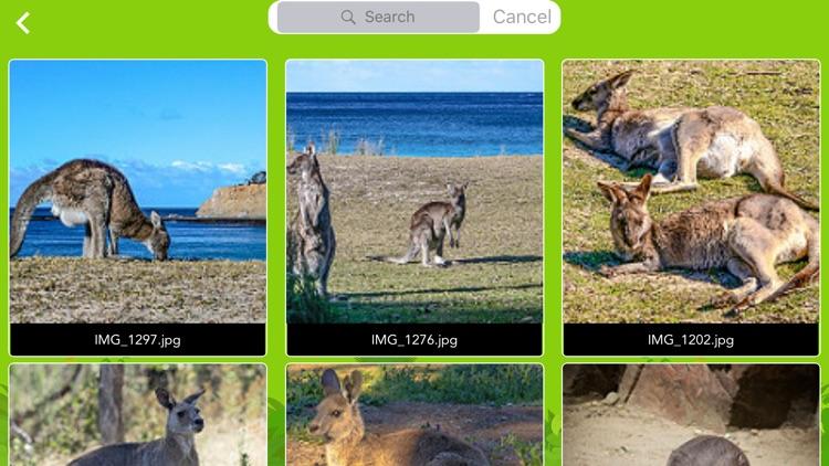 WildAnimal Collage and Frame screenshot-4