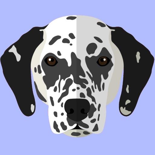 My Dalmatian