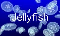 Jellyfish VR