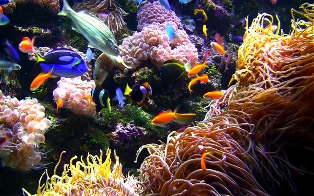 Aquarium live hd screensaver on the mac app store for Live fish store
