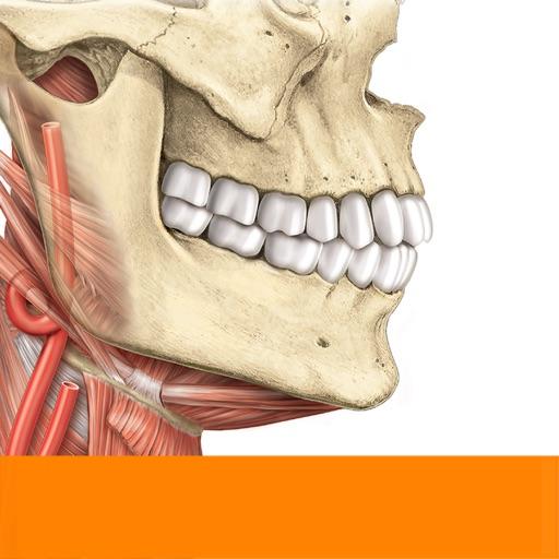 Sobotta Anatomy Atlas App Revisin Medical Apps Rankings