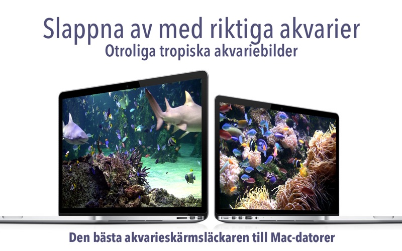 Akvarium: Ocean skärmsläckare på PC