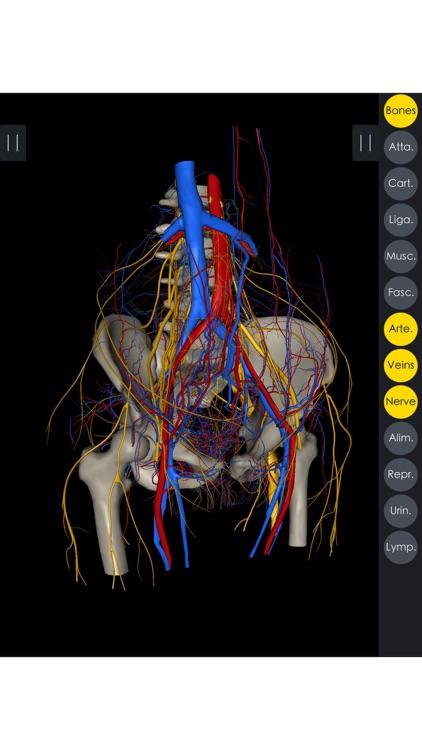 Medsee - 3D Detailed Anatomy