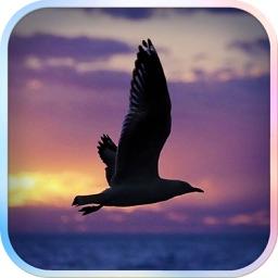 Filter Camera - Fly Bird & Photo Filters