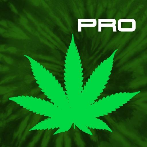 Cannabis News Pro