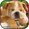 Dog Animal Jigsaw Puzzle Free For Kids and Adults Reviews