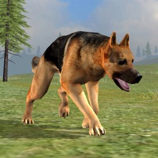 Activities of Dog Survival Simulator 2
