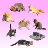 Codes for Kitten GO! Hack
