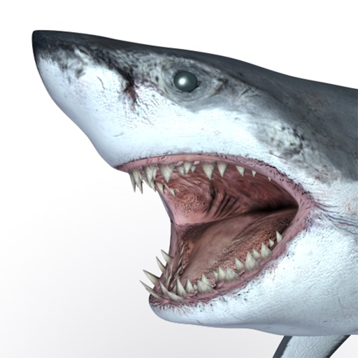 Talking Great White : My Pet Shark