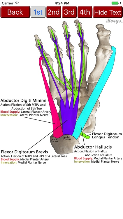 Pocket LEA - Lower Extremity Anatomy screenshot-3